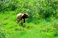 Alaska Wildlife Conservation